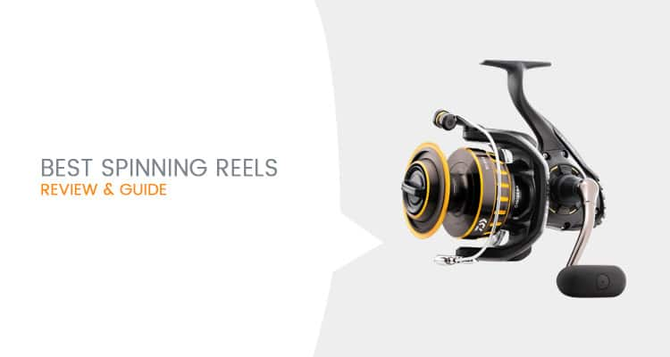 Best Spinning Reels To Buy