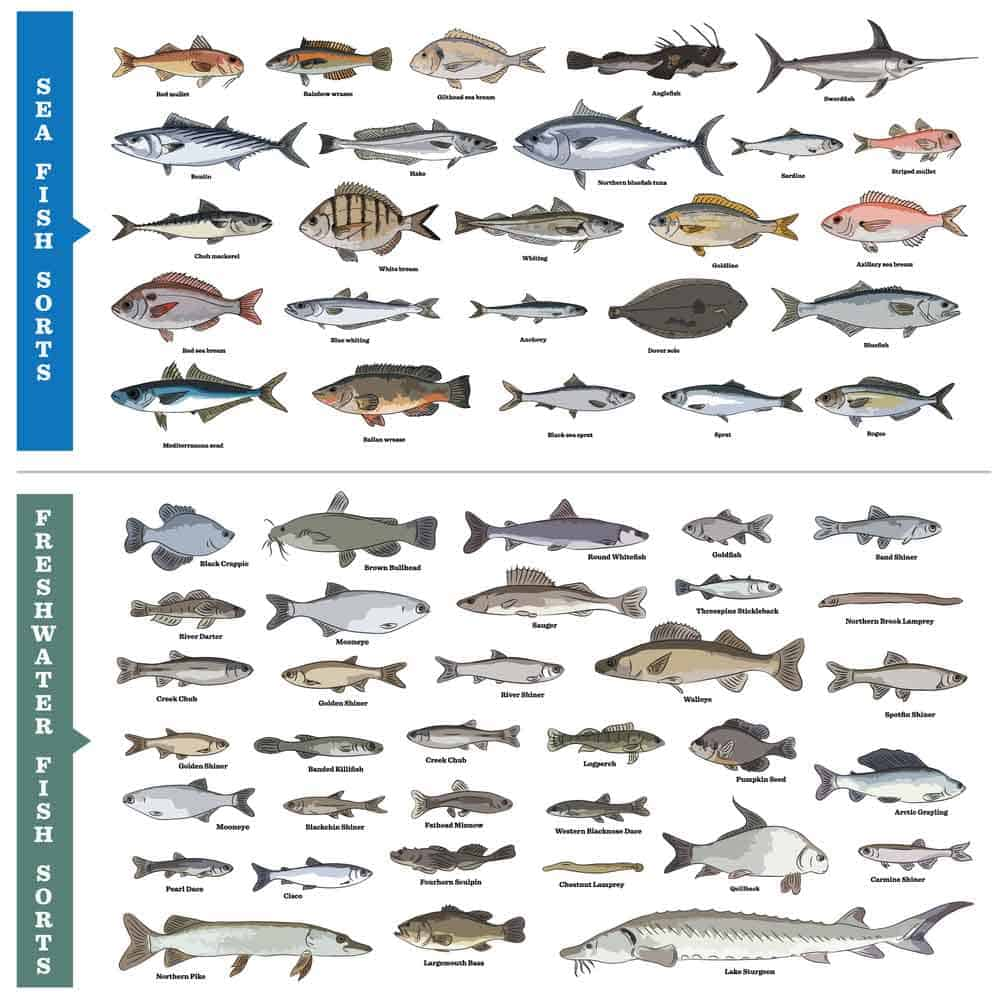 Saltwater and Freshwater Fish Species